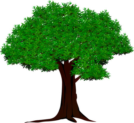 tree root: tree vector and green leaves hav