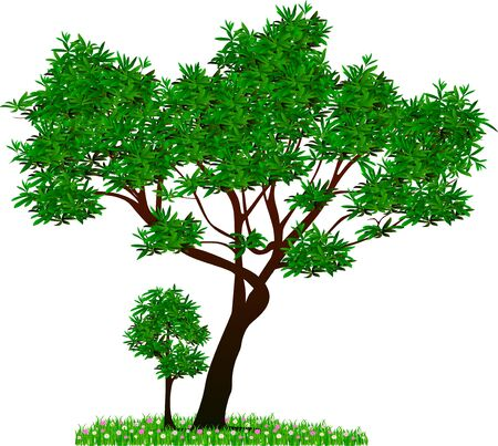 tree illustration: tree vector and green leaves have grass and flowers bottom abstract design Illustration