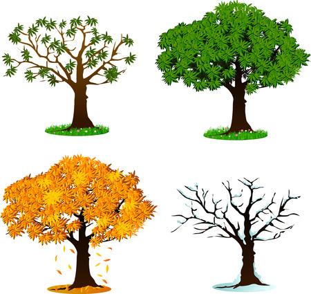 cuatro elementos: Árbol en cuatro estaciones concepto de diseño - primavera, verano, otoño, invierno. Ilustración del vector. Aislado en el fondo blanco.
