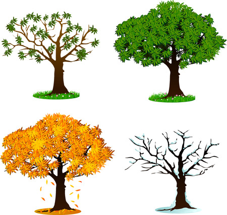 spring season: Tree in four seasons concept design - spring, summer, autumn, winter. Vector illustration. Isolated on white background.