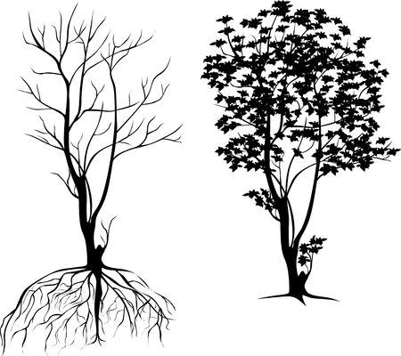 haya: silueta de un �rbol con ra�ces y sin hojas Vectores