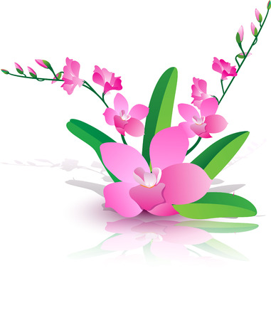 pink orchid: Pink orchid, orchid pink from the reflection of a mirror, orchid flowers and leaves.