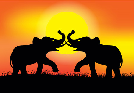 battle: Silhouette elephant battle on sunset