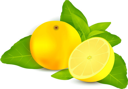 naturalistic: Fresh lemons with leaves white background Illustration