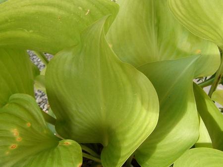 tropical shrub: Non-flowering green tropical plants Stock Photo