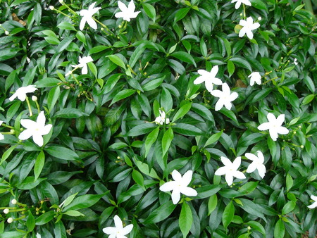 Tropical plants with white flowers in a garden stock photo picture stock photo tropical plants with white flowers in a garden mightylinksfo