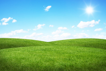 Beautiful green grass with blue sky in the background photo