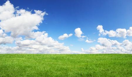 horizonte: Hermosa hierba verde con el cielo azul en el fondo