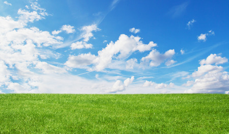 Beautiful green grass with blue sky in the background Stock Photo