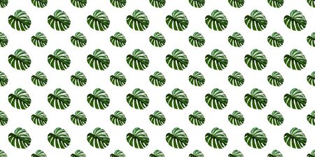 Monstera Deliciosa leaf seamless pattern. Modern tropical background with jungle plants. Green exotic pattern with palm leaves
