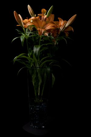 Tiger Lily flowers in tall vase isolated on black photo