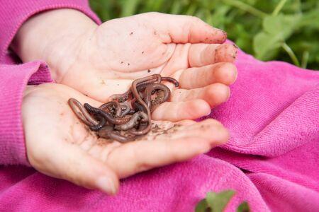 earthworms: Detalle de la ni�a manos las lombrices de tierra de explotaci�n con fondo de hierba