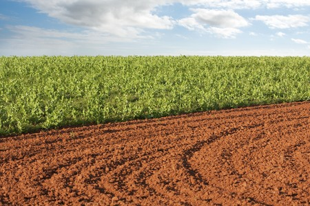 Ploughed field and potato crop with sky background photo