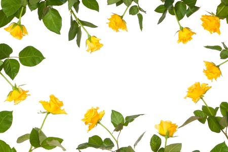 Yellow rose flower border arrangement isolated on white with blank space for text Stock Photo - 15163653