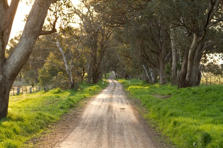 Australian rural dirt road landscape in late afternoon sun photo