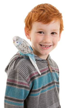 budgie: Smiling boy with pet bird budgerigar on shoulder. Isolated on white.
