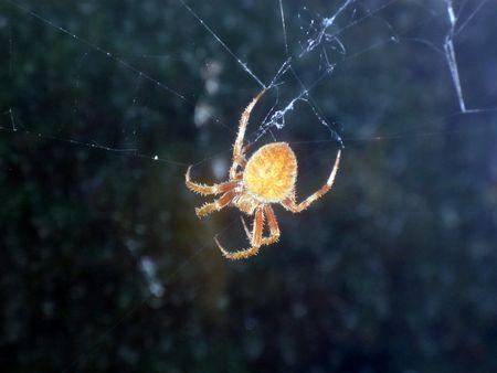 arachnoid: spider