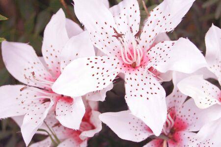 Mooie witte bloemen Stockfoto