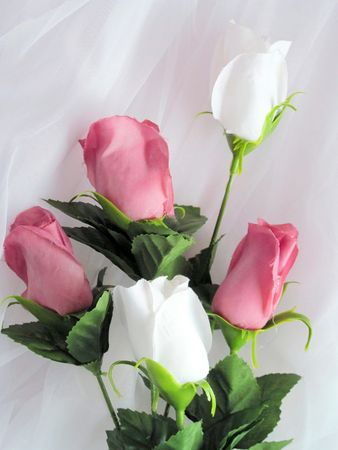 Pink and white roses on white lace background Stock Photo - 9881536