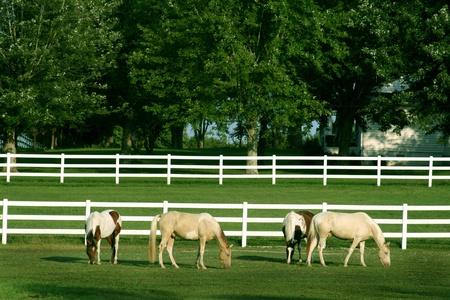 Horses grazing in field photo