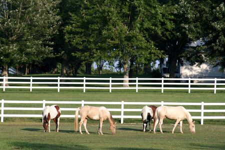 Four beautiful horses with white fence in background photo