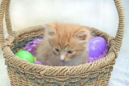 Cute little kitten in Easter Basket with candy eggs