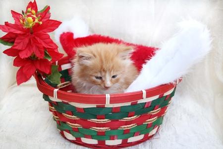 basket: Yellow kitten in Christmas basket with santa hat