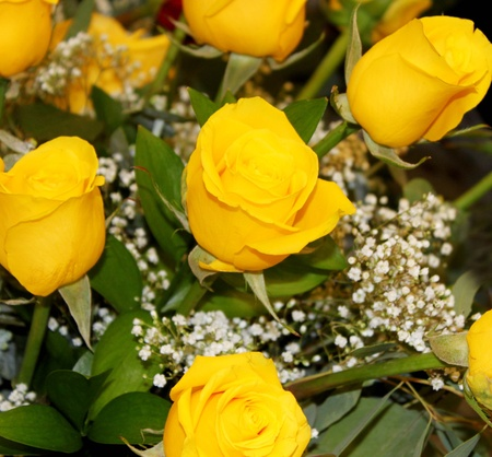 yellow: Bouquet of yellow roses