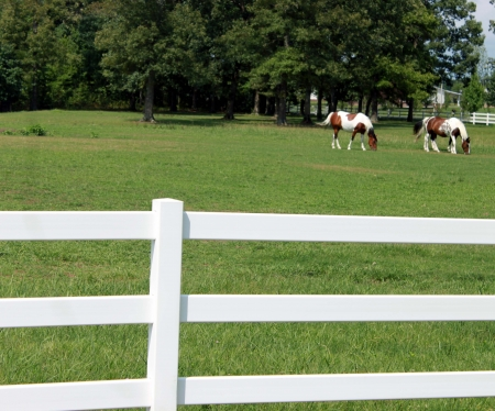 Two pinto horses on ranch with white fence photo