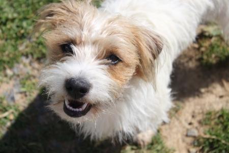 running nose: Cute little dog