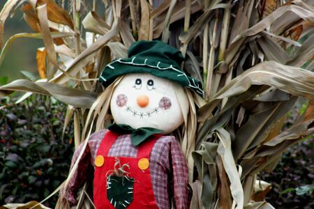 Scarecrow in Corn patch for Halloween