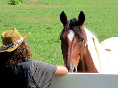 Pinto horse at the white fence