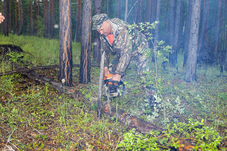 Forestry inspector with a group of foresters marking out the plot for sanitary felling of the forest. Manufacture of the index of the direction of sanitary felling of wood in the Siberian taiga by a chainsaw. Man cuts tree with chainsaw in forest.