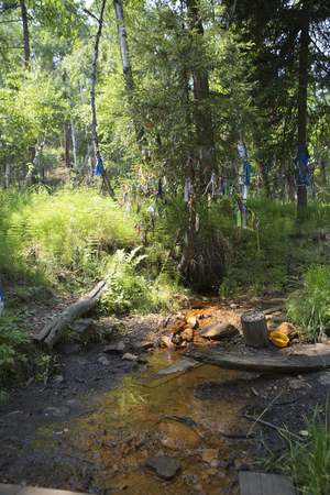 A holy source of drinking. Mineral water flows in a stream in the forest. Healing water in the Siberian taiga. People take bottles of water from a mountain stream. People drink water with healing power.