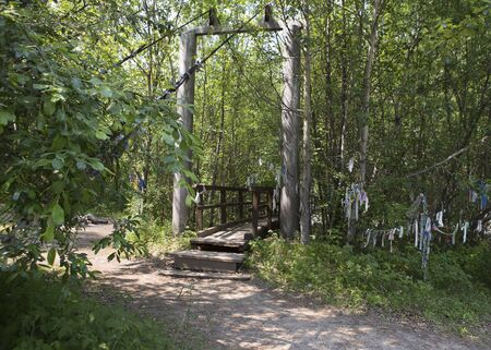A forest path from the boards runs between numerous trees and bushes in the Siberian taiga. 写真素材