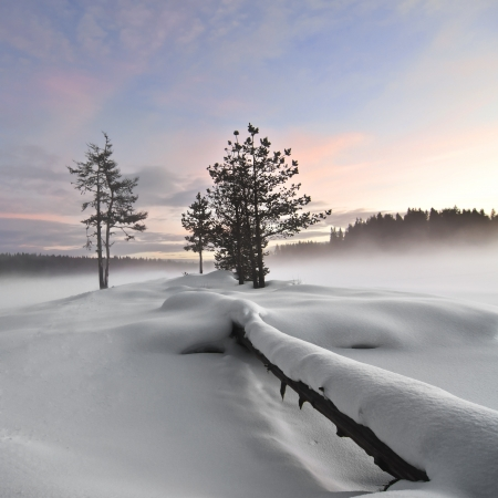 Wintry landscape   Mist over frozen lake, fallen tree foreground, moody sky