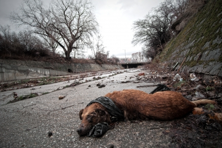 Dead dog at Illegal landfill near city sewer photo