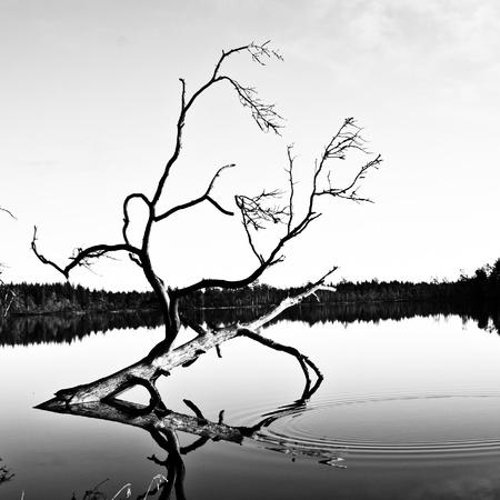 kahlen Baum Standard-Bild