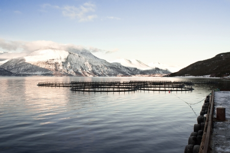 Salmon farms  Fjords in Norway  photo