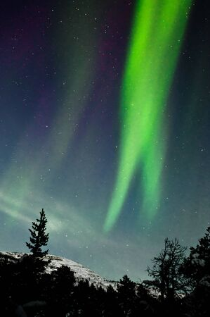 Northern lights above forest and mountain. Captured near Skibon, Norway photo
