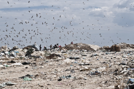 Flying birds over the landfill photo