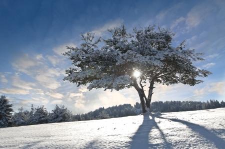 Winter tree, moody sky