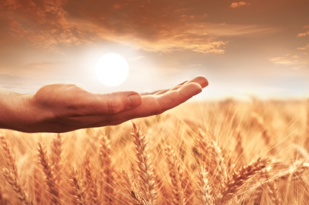 Womans hand holding the sun over wheat field. photo
