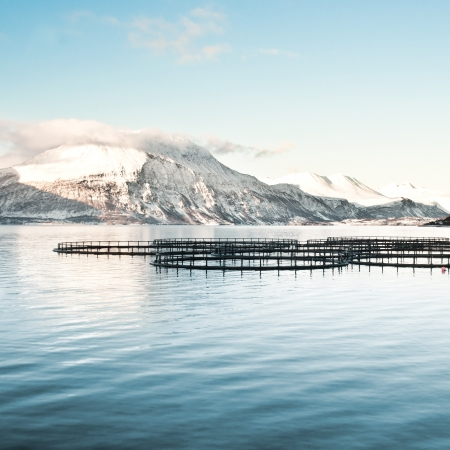 Fish farms in northern Norway photo