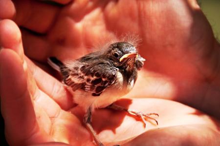 Little bird sitting in man\ photo