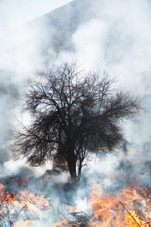 burning bush: Fire burning at field and forest Stock Photo