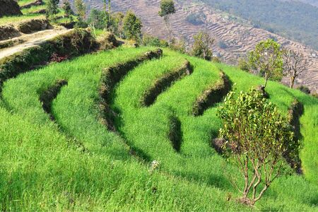 Terraced field in the Himalayas Stock Photo