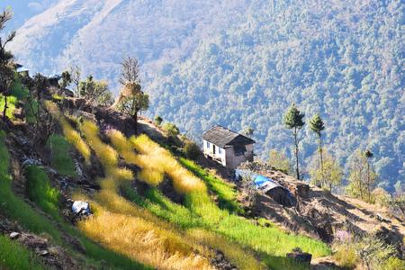 cultivo de trigo: Rice and wheat crop terraces