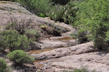 Desert Stream after Rainfall Banco de Imagens