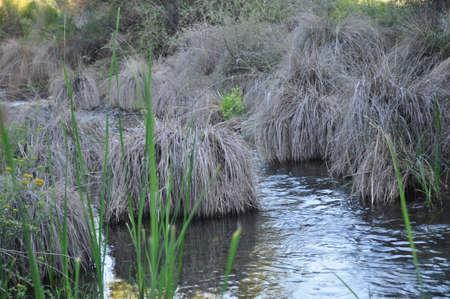 gilbert: Desert Stream